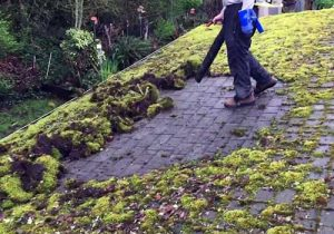 roof moss removal maple ridge